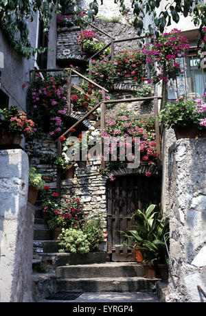 Blumen auf Treppe; Treppe - Stock Photo