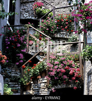 Blumen auf Treppe - Stock Photo