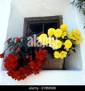 blumenfenster fenster mit blumen balkonblumen blumen auf terrasse stock photo royalty free. Black Bedroom Furniture Sets. Home Design Ideas