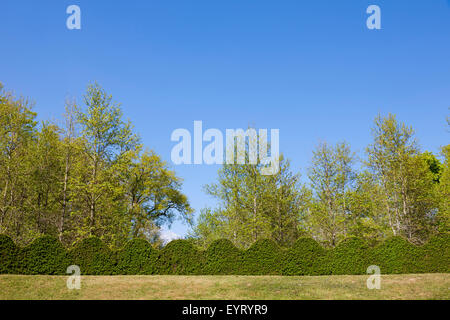 Box hedge in the castle grounds, Cormatin, France - Stock Photo