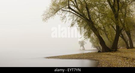 Germany, North Rhine-Westphalia, Cologne, pastures on the Rhine shore beside the zoo bridge in fog - Stock Photo