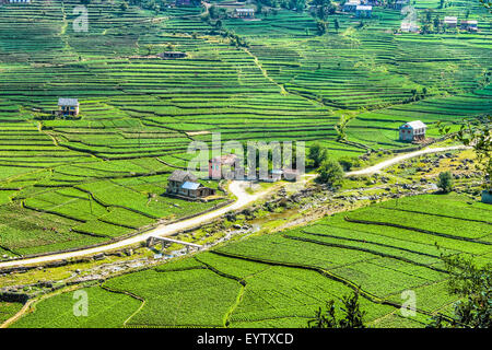 Small village and terrace farming in himalaya of for Terrace farming in india