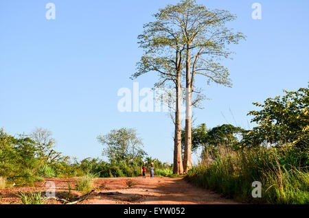 Two women walking by very tall trees in Angola and carrying baskets on their head - Stock Photo