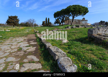 Temple of Athena (Temple of Ceres), Paestum, Greek ruins, UNESCO World Heritage Site, Campania, Italy, Europe - Stock Photo