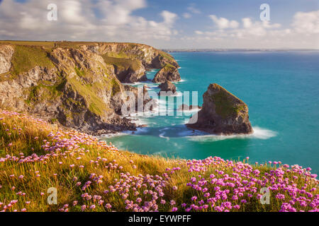 Pink thrift flowers, Bedruthan Steps, Newquay, Cornwall, England, United Kingdom, Europe - Stock Photo