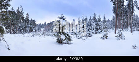 Norway spruce (Picea abies), snowy Norway spruce forest in winter, Germany, Bavaria - Stock Photo