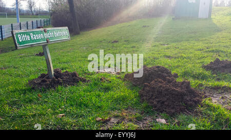 European mole, Common mole, Northern mole (Talpa europaea), sign 'keep off the grass' in a molhill at the edge of - Stock Photo