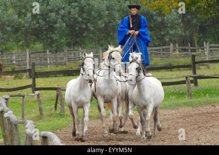 domestic horse (Equus przewalskii f. caballus), dressage exhibition of a horse herdsman in the puszta, Hungary, - Stock Photo