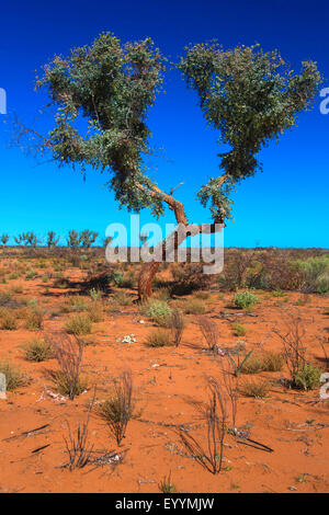 dry landscape at the Australian outback, Australia, Western Australia, Agnew Sandstone Road, Leinster - Stock Photo