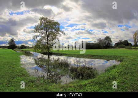pastureland with tree, creek , fields and cloudy sky, Germany, Baden-Wuerttemberg, Ortenau - Stock Photo