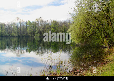 clouds and trees mirroring in the water of a lake, Germany, Baden-Wuerttemberg, Ortenau, Willstaett - Stock Photo
