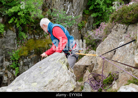 Experienced senior rock climber belayed at top of a climb holding climbing rope and looking down. Snowdonia Wales UK Britain