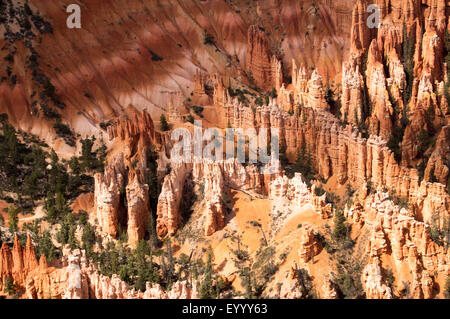 Amphitheatre of Bryce Canyon, USA, Utah, Bryce Canyon National Park - Stock Photo