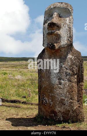 Moai statue, Chile, Rapa Nui National Park - Stock Photo