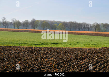 ploughed up fields treated with herbicides in spring, Germany, North Rhine-Westphalia - Stock Photo