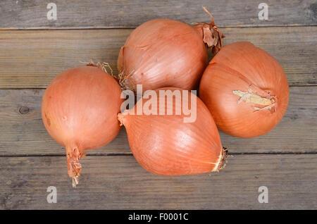 Garden onion, Bulb Onion, Common Onion (Allium cepa), four Grano onions - Stock Photo