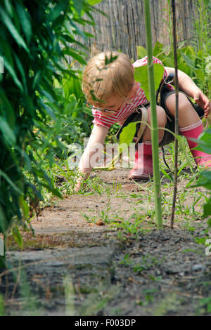 little girl playing in a garden plot, Germany - Stock Photo
