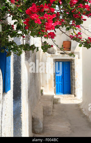 paper plant, four-o'clock (Bougainvillea spec.), white wall with Bougainvillea, blue front door, Greece, Cyclades, - Stock Photo