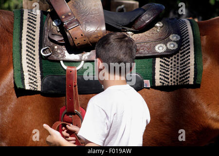 Boy Cinching and Securing Saddle on Chestnut Horse Preparing to Ride - Stock Photo