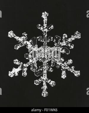 Meteorology: snowflake magnified under a microscope - Stock Photo