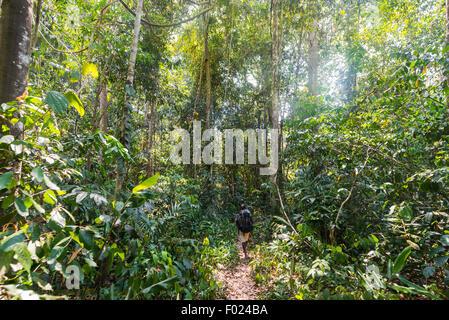 Hikers, man walking on a footpath through the jungle, Kuala Tahan, Taman Negara National Park, Malaysia - Stock Photo
