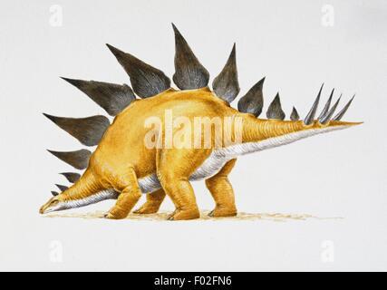 Stegosaurus sp, Stegosauridae, Late Jurassic. Artwork by Nick Pike. - Stock Photo