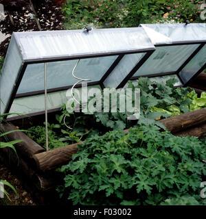 Fruehbeet, Garten, - Stock Photo