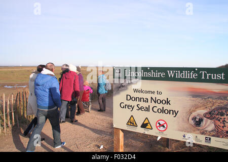 Visitors enter the public viewing area at Donna Nook nature reserve to witness grey seal pups and their mothers, - Stock Photo