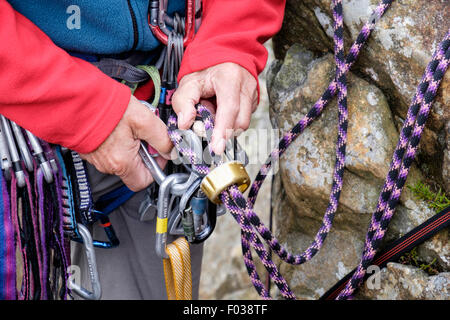 Climber tying in and attaching a climbing rope with a belay device rappel descender to a harness karabiner for belaying. - Stock Photo