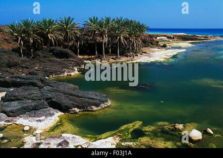 Palm trees along the Arabian Sea coastline, near Hadibu, Socotra Island (UNESCO World Heritage List, 2008), Yemen. - Stock Photo