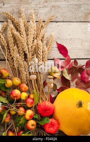 autumn gatherings of wheat ears, crabapples, chinese lanterns, poppy seed heads, virginia creeper leaves - Stock Photo