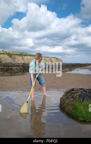 A child with a fishing net looking for fish in a rock pool at Robin Hood's Bay beach in Yorkshire, UK - Stock Photo
