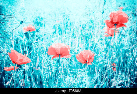 Abstract colors filtered poppy flowers on meadow, shallow depth of field. - Stock Photo
