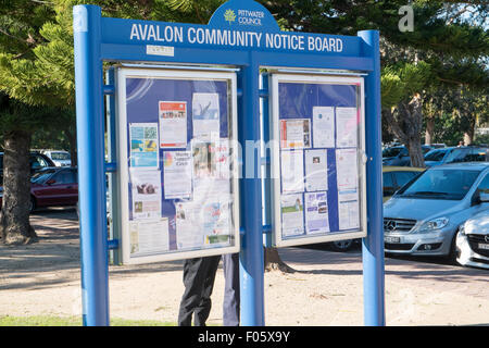 Avalon community notice board in the suburb of Avalon on sydney's northern beaches,New South Wales,Australia - Stock Photo