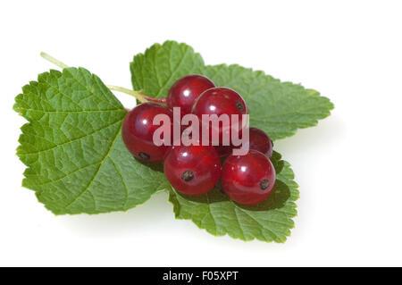 Johannisbeeren; Rote, Johannisbeeren; Ribes, rubrum; - Stock Photo