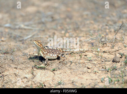 The image was shot near satara-Maharashtra-India - Stock Photo