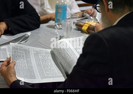 A religious Jewish man reading from the Talmud at Montefiore cemetery in Cambria Heights, Queens, New York - Stock Photo
