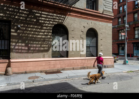 New York, NY 8 August 2015 - Woman walking her dogs on Staple Street in the TriBeCa neighborhood of Manhattan ©Stacy - Stock Photo