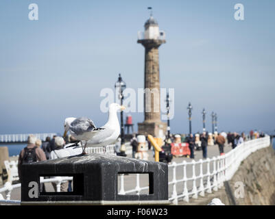 Seagulls sitting on litter bin on Whitby pier. Whitby, North Yorkshire, England, UK - Stock Photo