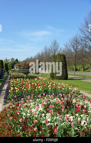 Queen Mary's Gardens in spring, Regent's Park, London Borough of Camden, London, England, United Kingdom - Stock Photo