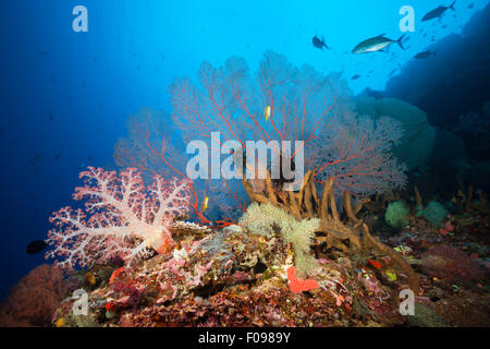 Coral Reef Scenery, Russell Islands, Solomon Islands - Stock Photo