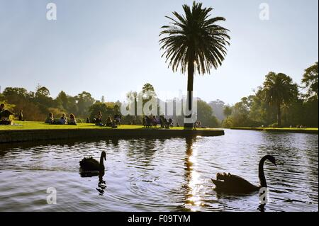 View of swans and people in Royal Botanic Gardens, Melbourne, Victoria, Australia - Stock Photo