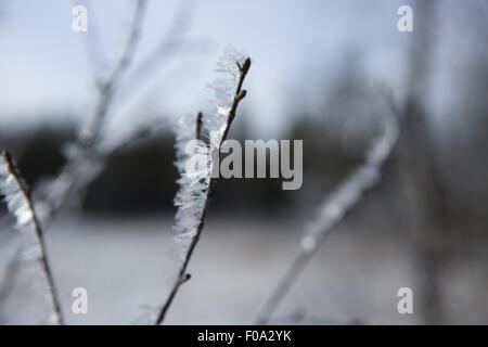 Close-up of frozen grasses in Lapland, Finland - Stock Photo
