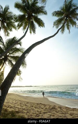 View of palm trees and Tangalle beach in Hambantota District, Southern Province, Sri Lanka - Stock Photo
