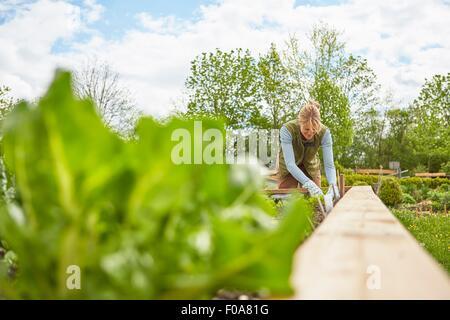 Mature woman, outdoors, gardening - Stock Photo