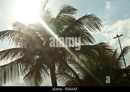 Palm trees and sunshine, Rio de Janeiro, Brazil - Stock Photo