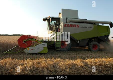 Erntemaschine, Dreschmaschine, Vollernter, - Stock Photo