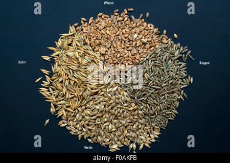 Getreidesorten; Getreide; Getreidekoerner; - Stock Photo