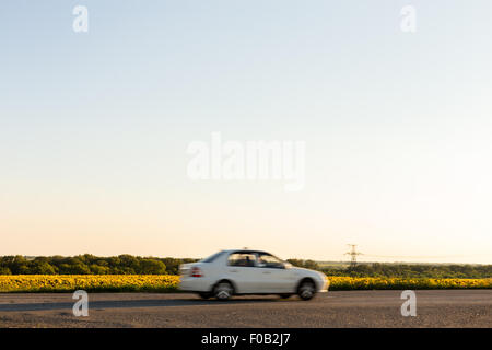 Blurred car next to sunflower field on sunset - Stock Photo