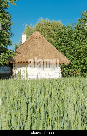 Wheat field in Tokarnia open-air museum, Poland - Stock Photo